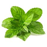Mint leaves isolated Stock Image