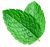 Mint leaves isolated. On white. Mint Clipping Path stock images