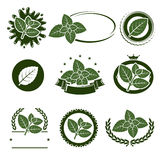 Mint leaves label set. Vector Royalty Free Stock Image