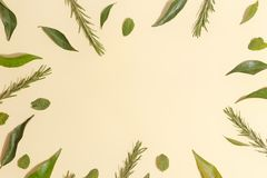 Mint leaves, mandarin and rosemary on a yellow background. Top view royalty free stock image