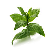 Mint leaves over white background Royalty Free Stock Photo