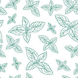 Mint leaves, peppermint isolated on white background, Hand drawn vector seamless patterns, spicy herbs, kitchen texture. Doodle cooking ingredient for design Stock Photography