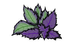 Mint leaves purple illustration. Mint leaves purple on white Background, illustration Royalty Free Stock Photo