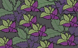 Mint leaves purple and Purple pink background illustration. Several Mint leaves purple and Purple pink background illustration Royalty Free Stock Photography