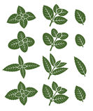 Mint leaves set. Vector Royalty Free Stock Photo