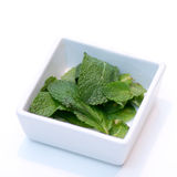 Mint leaves in square shaped white bowl on white. Table Royalty Free Stock Images
