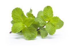 Mint leaves on a white background. Mint leaves from Thailand on a white background Stock Photos