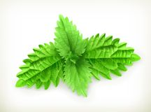 Mint leaves vector illustration Royalty Free Stock Images