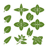 Mint leaves vector set Royalty Free Stock Images