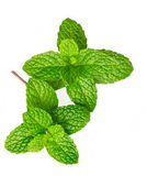Mint. Leaves on white background Royalty Free Stock Images