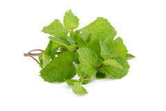 Mint leaves  on white background. Stock Photography