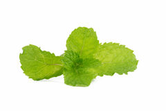 Mint leaves  on white background. Stock Image