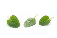 Mint leaves  on white background. Fresh raw mint leaves  on white background Royalty Free Stock Images