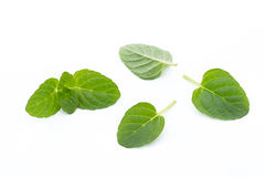 Mint leaves  on white background. Fresh raw mint leaves  on white background Stock Photo
