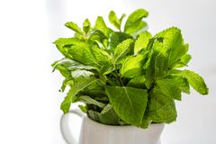 Mint leaves in white jar. White wood background Royalty Free Stock Images