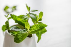 Mint leaves in white jar. White wood background Stock Photo