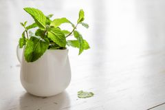 Mint leaves in white jar. White wood background Royalty Free Stock Photography