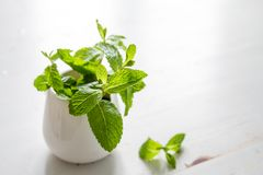 Mint leaves in white jar. White wood background Stock Image
