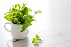 Mint leaves in white jar Royalty Free Stock Photography