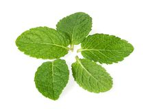 Mint leaves on a white top view.  Stock Images