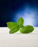 Mint leaves on wooden table with spot light Stock Photography