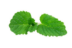 Mint, lemon balm Stock Photography