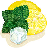 Mint and lemon Stock Images