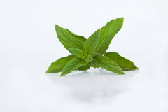 Mint Royalty Free Stock Photo