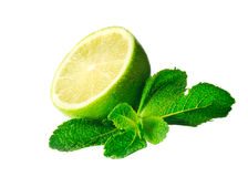 Mint and lime isolated Stock Images