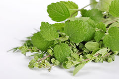 Mint and marjoram. Over white background closeup Royalty Free Stock Photo