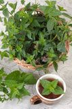 Mint (Mentha). Royalty Free Stock Images