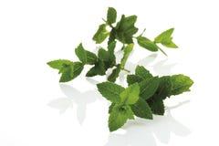 Mint (Mentha spicata var. crispa), close-up Stock Image