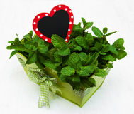 Mint in a metal  pot. Mint in a metal pot with a empty wooden label in hearts shape Stock Images