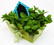 Mint in a metal  pot. Mint in a metal pot with a empty wooden label in house shape Stock Image