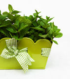 Mint in a metal pot. On a old wooden background Stock Photography