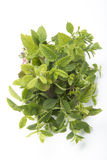 Mint mix in bouquet. Different species of mint in a bouquet Royalty Free Stock Photography
