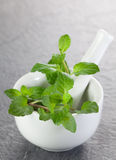 Mint in a mortar Stock Images
