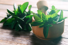 Mint in mortar with pestle Stock Photography