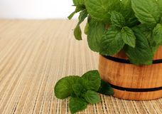 Mint in a mortar Stock Image