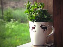 Mint in a mug royalty free stock images