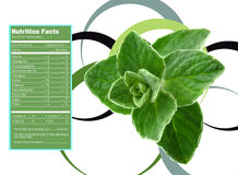 Mint nutrition facts. Creative Design for mint with Nutrition facts label Stock Photos
