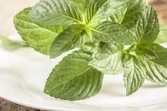 mint nya leaves för bakgrund white Royaltyfri Bild