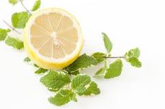 Mint och citron royaltyfri bild