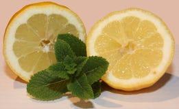 Mint och citron Fotografering för Bildbyråer