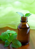 Mint oil Royalty Free Stock Photography