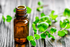 Mint oil. In a bottle and fresh levaes royalty free stock photo
