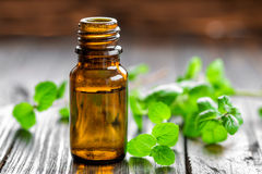 Mint oil. In a bottle and fresh levaes Royalty Free Stock Photos