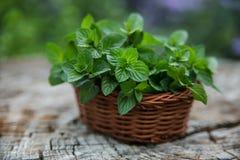 Mint in piccolo canestro su fondo di legno naturale, menta piperita, Immagini Stock