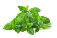 Free Mint Plants Stock Photography - 40155932