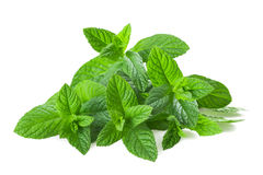 Mint plants Stock Photography